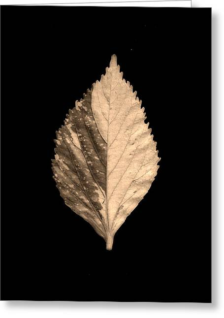 Textured Leaf Greeting Card by Sumit Mehndiratta