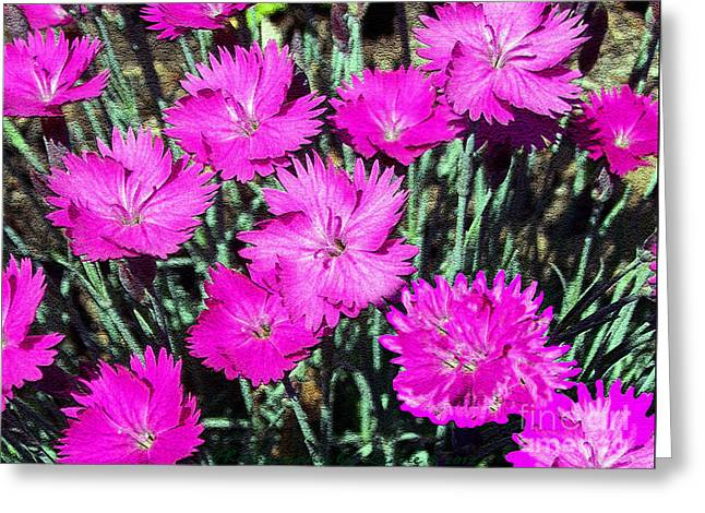 Greeting Card featuring the photograph Textured Pink Daisies by Gena Weiser