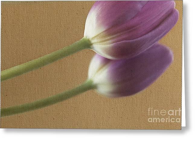 Textured Purpletulip Greeting Card
