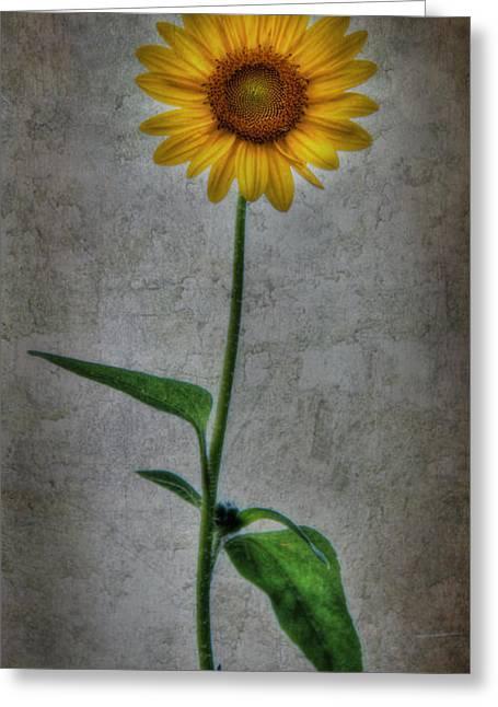 Textured Sunflower 1 Greeting Card by Lori Deiter