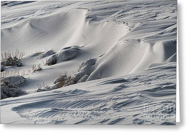 Textures Of Snow Greeting Card by Edward R Wisell