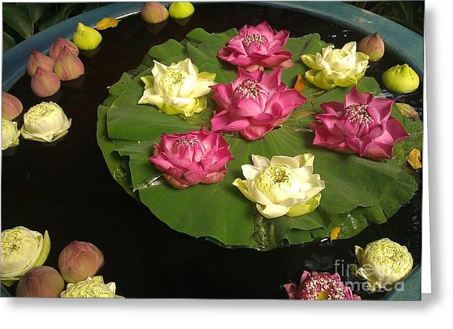 Thai Lilies  Greeting Card by Ted Williams