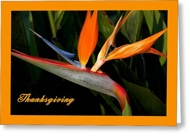 Thanksgiving Card Bird Of Paradise Greeting Card by Rosalie Scanlon