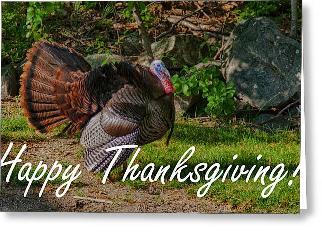 Thanksgiving Turkey Greeting Card by Jeff Folger