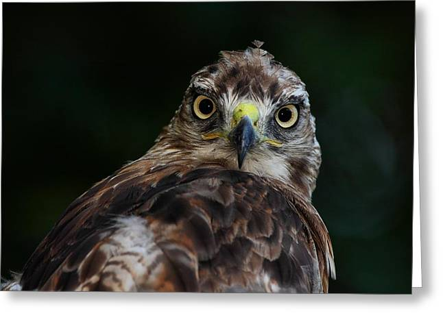 That Look Greeting Card by Mike Farslow