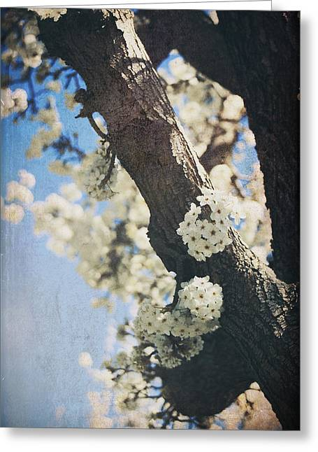 That March Greeting Card by Laurie Search