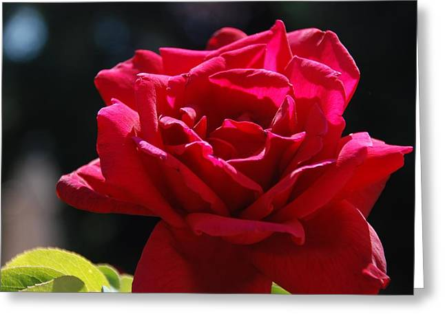 That Which We Call A Rose Greeting Card by Eric Tressler