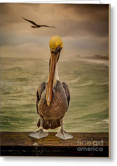 That's Mr. Pelican To You Greeting Card by Steven Reed