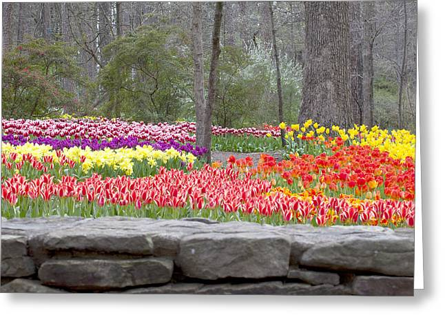 Greeting Card featuring the photograph The Abundance Of Spring by Robert Camp