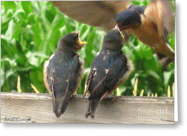 The Adult Barn Swallow Arrives With Lunch For One Greeting Card by J McCombie