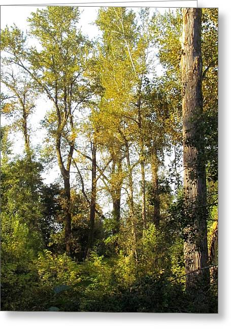 Greeting Card featuring the photograph The Alder Grove by I'ina Van Lawick