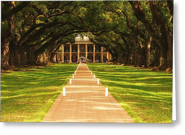 The Alley Of Oaks Greeting Card by Photography  By Sai