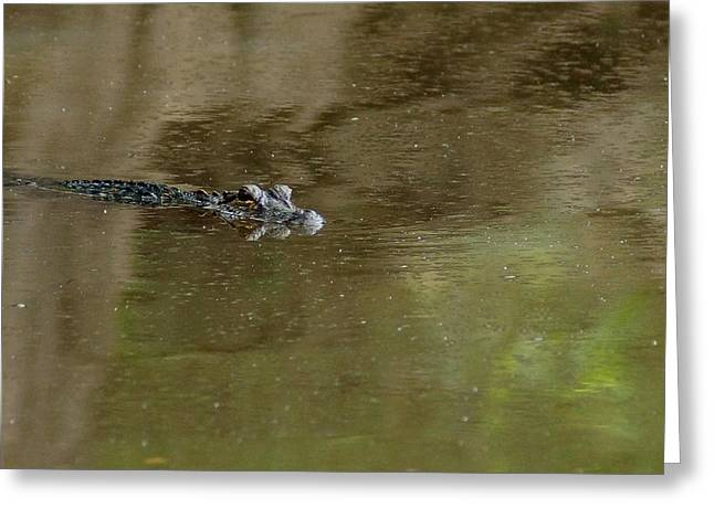 The American Alligator In The Flint River Greeting Card by Kim Pate