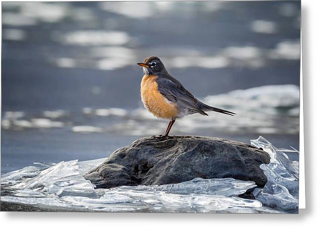 The American Robin Greeting Card by Bill Wakeley