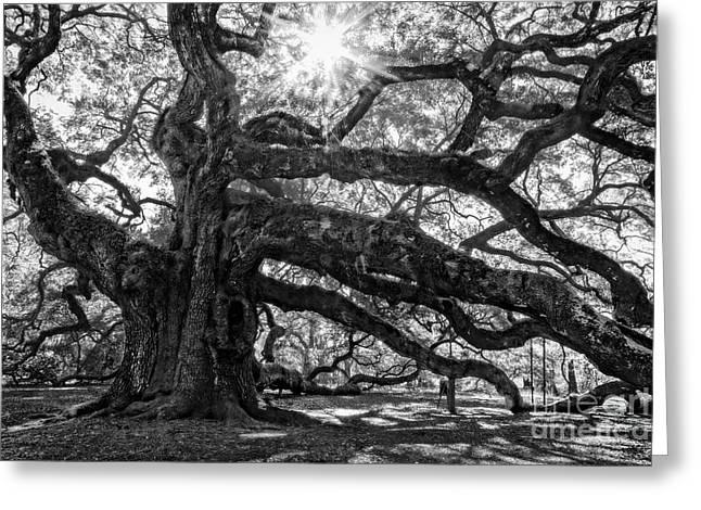 The Angel Oak Bw Greeting Card