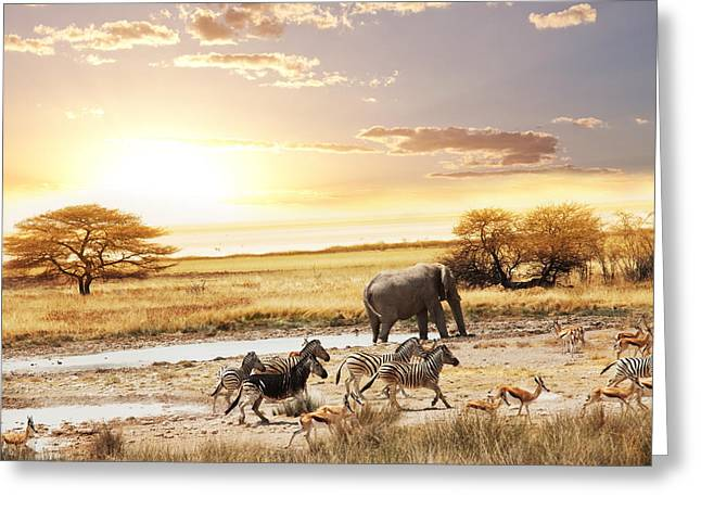 The Animals In Safari Greeting Card by Boon Mee