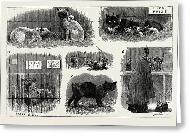 The Annual Cat Show At The Crystal Palace Greeting Card by Litz Collection