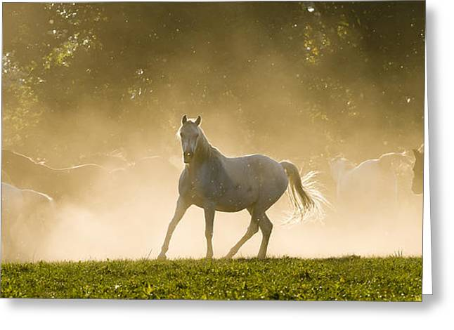 The Arabian Horse Greeting Card by Andy-Kim Moeller