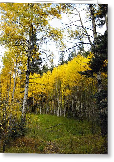 The Aspen Stand Greeting Card