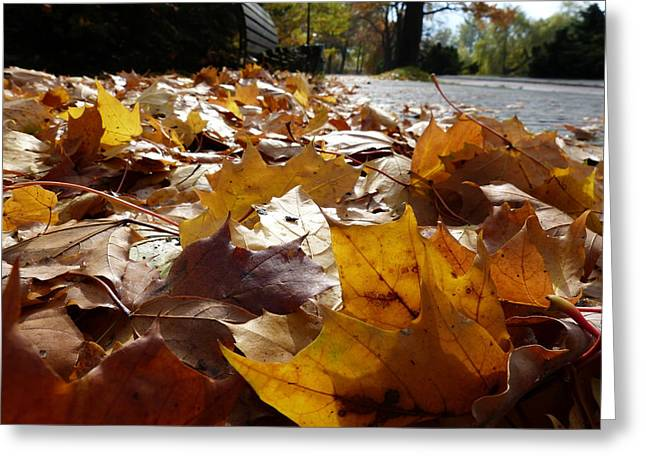 Greeting Card featuring the photograph The Autumn Carpet by Janina  Suuronen