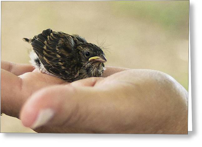 Greeting Card featuring the photograph The Baby Wren Can't Fly by B Wayne Mullins