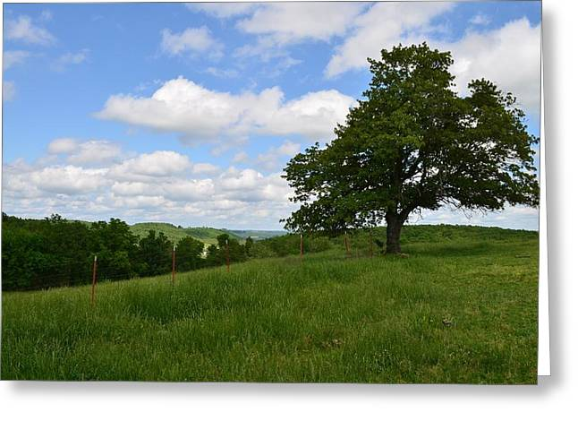The Back Field Greeting Card