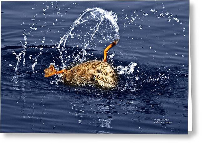 The Backstroke - Mallard Greeting Card by James Ahn