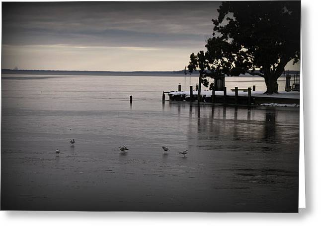 The Bay Is Frozen Greeting Card by Carolyn Ricks