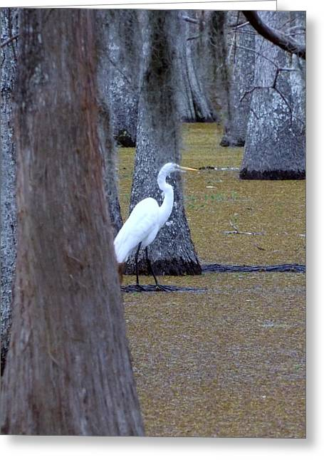 Greeting Card featuring the photograph The Bayou's White Knight by John Glass