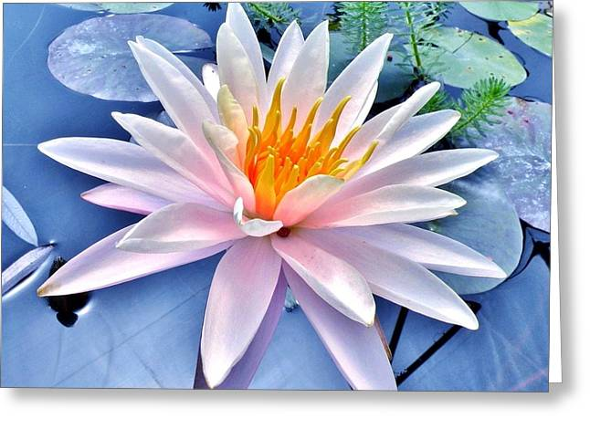 The Beautiful Lily Pond Greeting Card