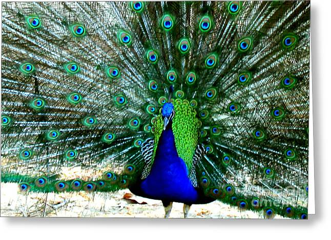 Greeting Card featuring the photograph The Beautiful Plumage by Kathy  White