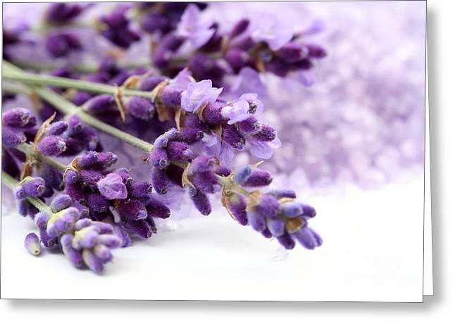The Beautiful Purple Flower Greeting Card