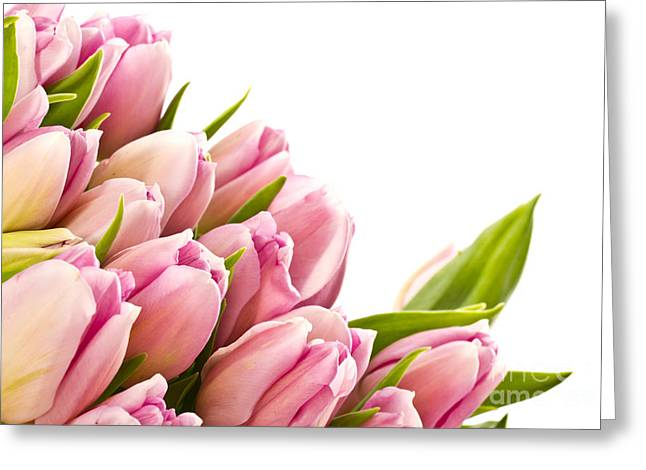 The Beautiful Purple Tulips Greeting Card