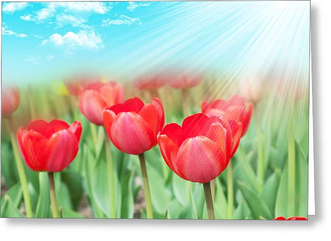 The Beautiful Summer Flowers Greeting Card by Boon Mee