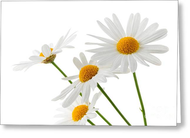 The Beautiful White Flower Greeting Card