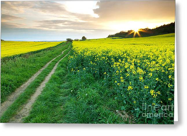 The Beautiful Yellow Rapeseed Field Greeting Card by Boon Mee