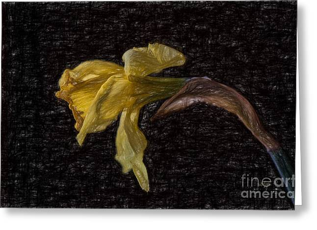 Beauty At The End Greeting Card by Lois Bryan