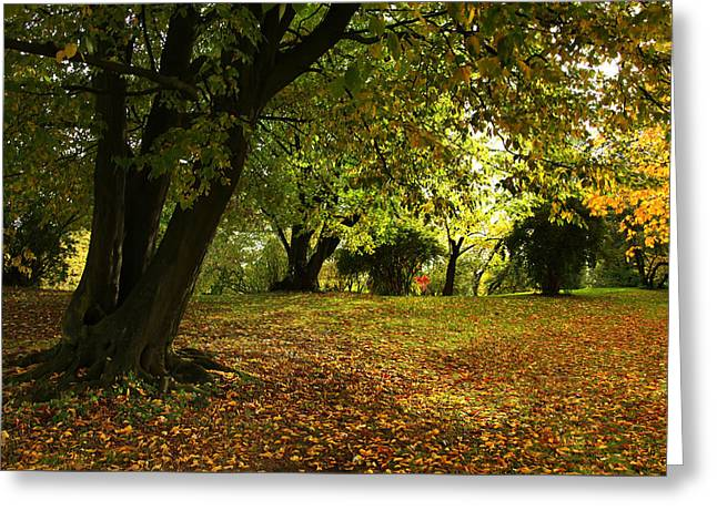 The Beauty Of Autumn Greeting Card