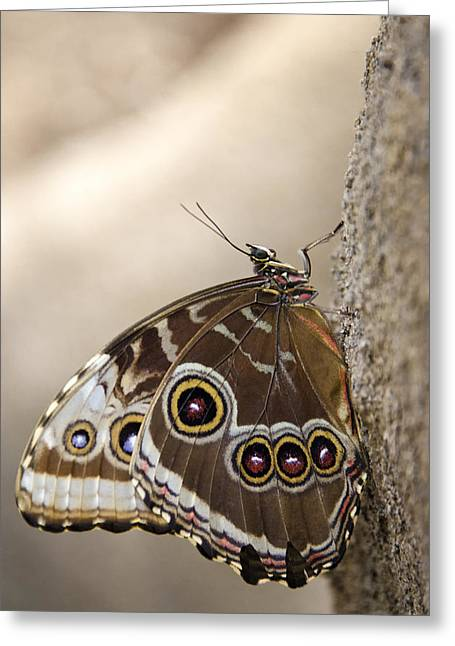 The Beauty Of The Butterfly  Greeting Card by Saija  Lehtonen