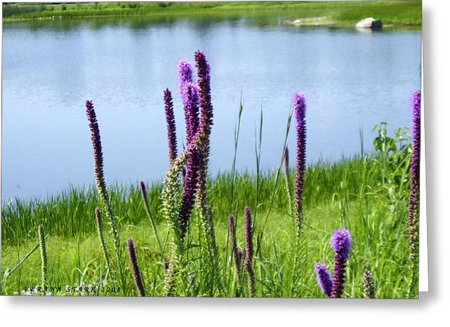 Greeting Card featuring the photograph The Beauty Of The Liatris by Verana Stark
