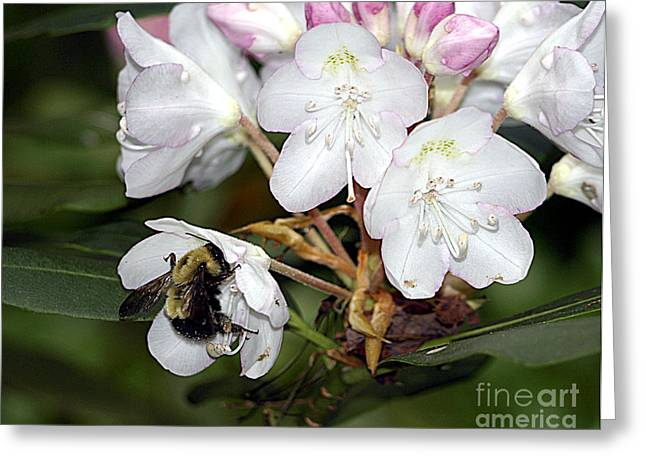 The Bee And The Rhododendron Greeting Card