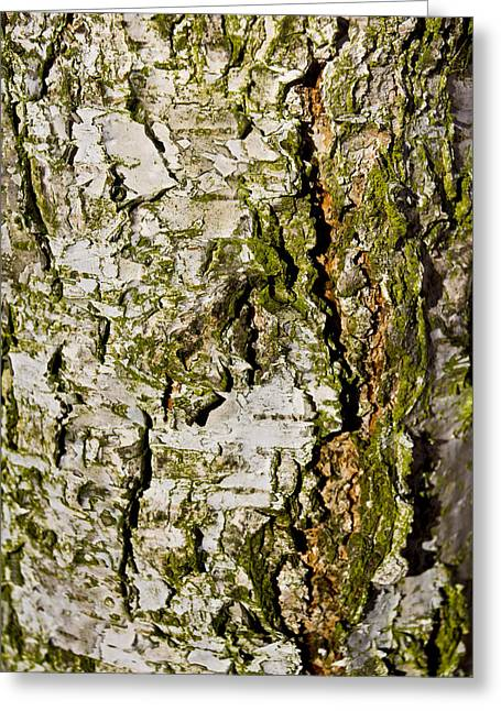 The Beech Tree Greeting Card by David Pyatt