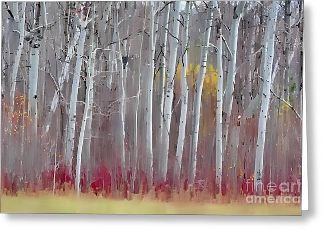 The Birches - Single Greeting Card by Andrea Kollo
