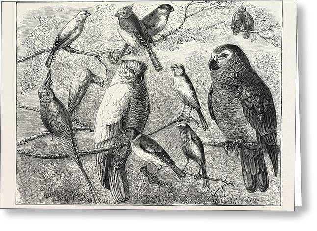 The Bird Show At The Crystal Palace, London, Engraving Greeting Card