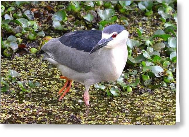 The Bird With Red Eyes Greeting Card