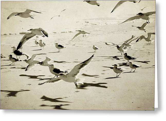 The Birds Greeting Card by Sharon Kalstek-Coty
