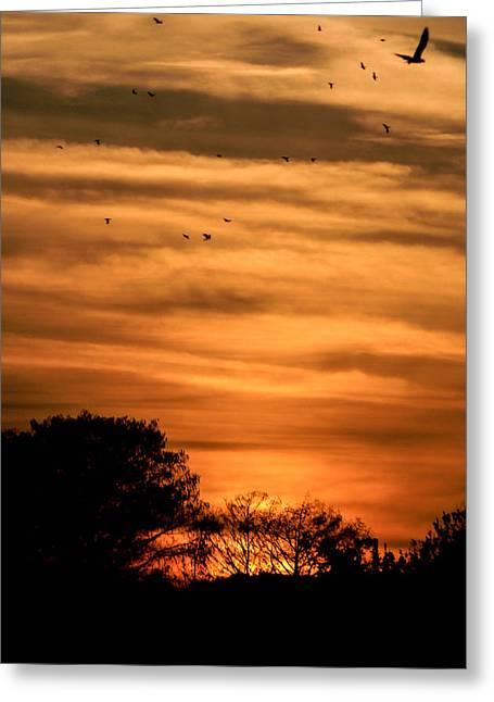 The Birds Still Fly Greeting Card by Christy Usilton