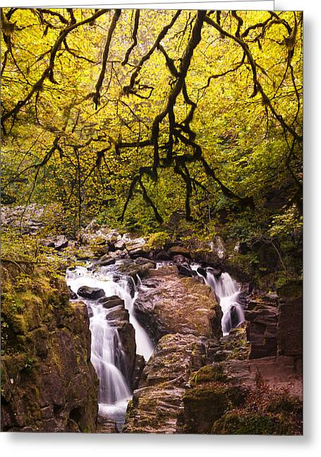 The Black Linn 2 Greeting Card