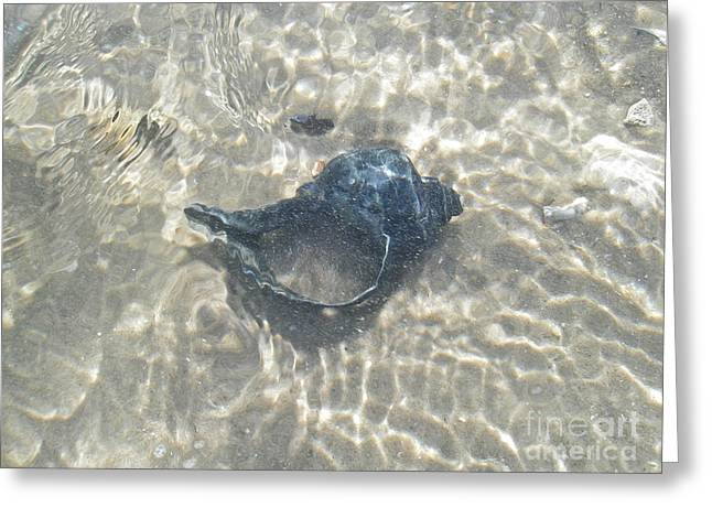 The Black Seashell Greeting Card by Mother Nature