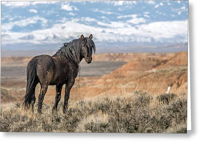 The Black Stallion Greeting Card by Sandy Sisti